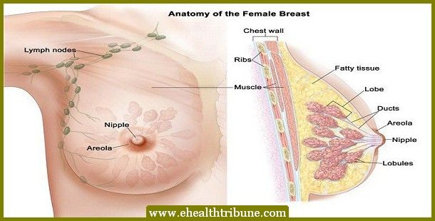 Foods-that-prevent-breast-cancer