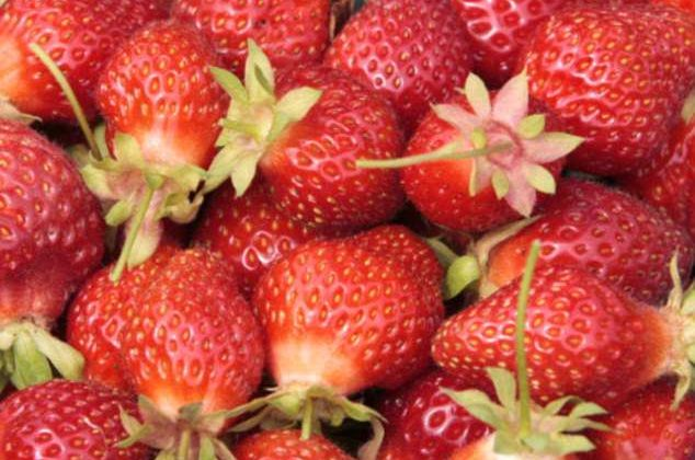 A Pint of Strawberries a day could stave off Breast Cancer, Study Finds